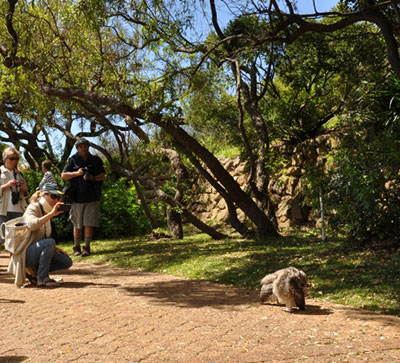 Kirstenbosch National Botanical Garden visitors gather around and take pictures of an eight-week-old Spotted Eagle Owl chick
